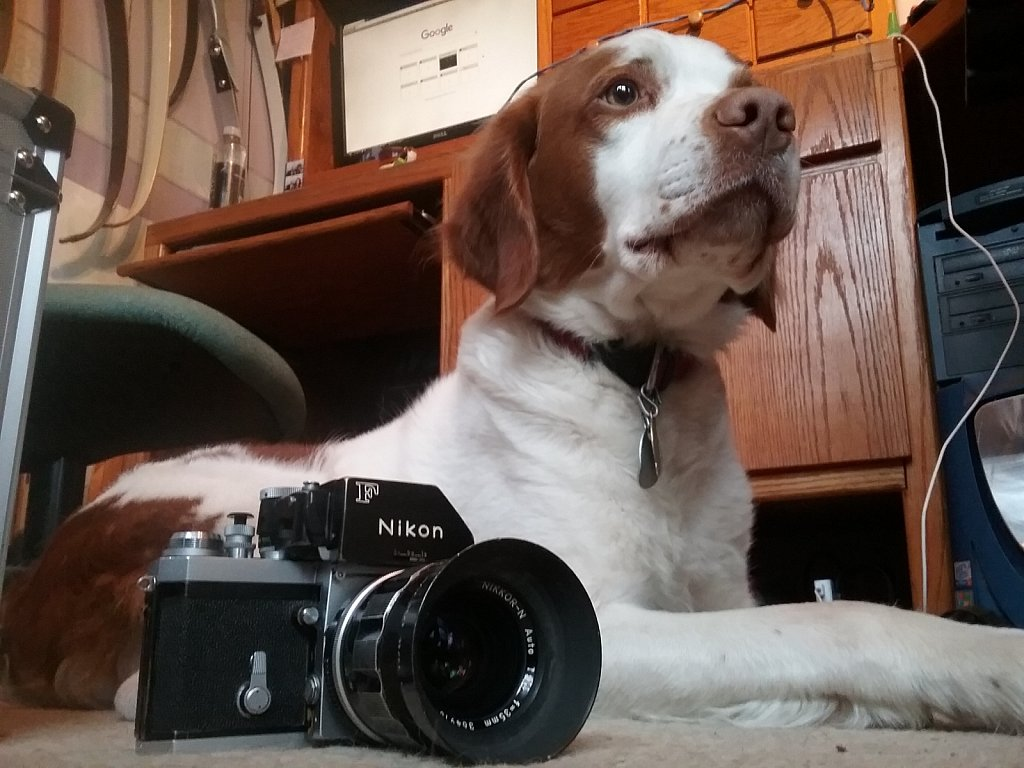 Camera Hound