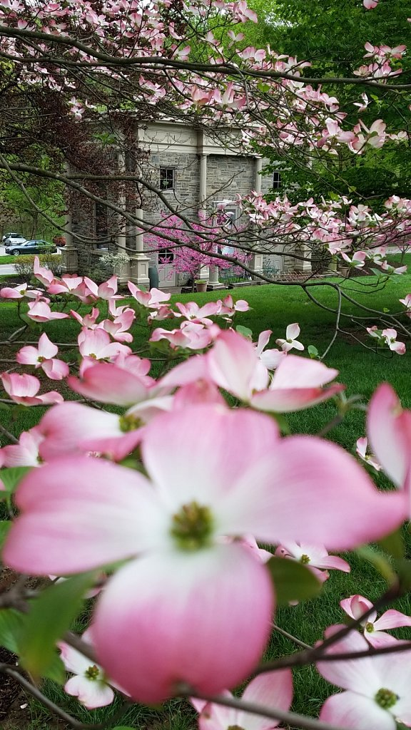 The Earth Center and Dogwood Flowers