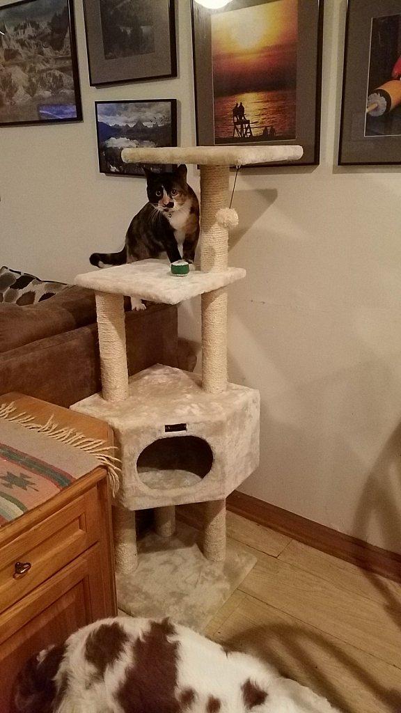 Spoiled Kitty