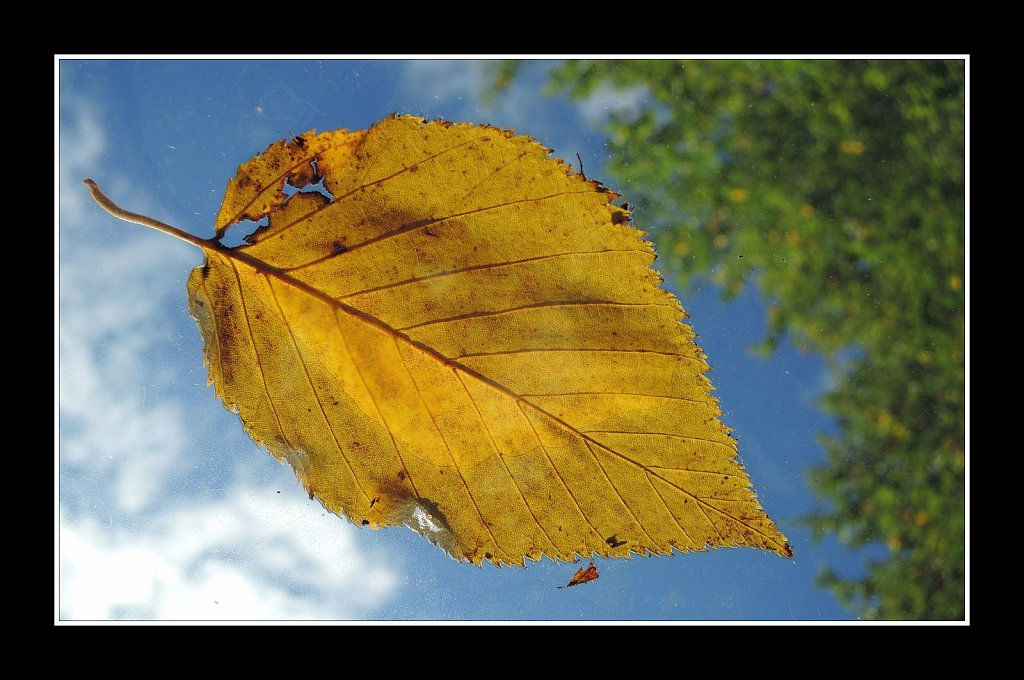 A Sure Sign of Autum