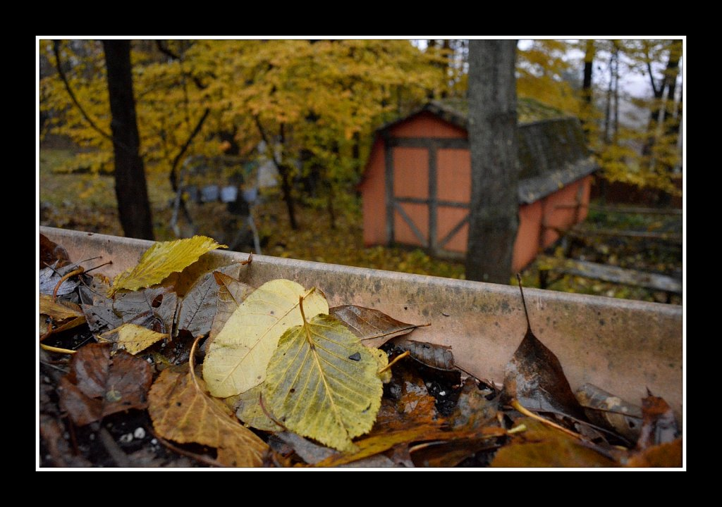 Shedding Leaves