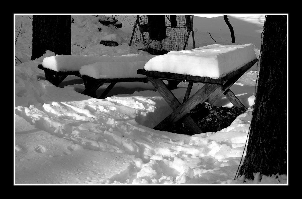 Snow Time For A Picnic
