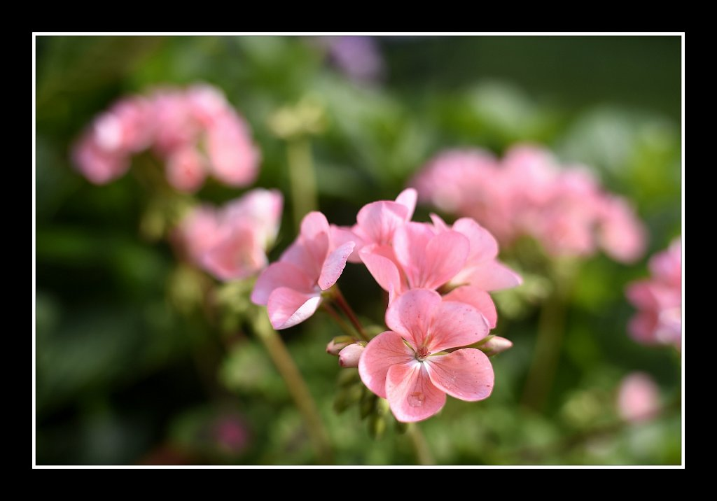 Project 365+ - By Joe Gigli