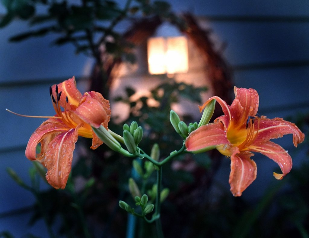 Project 365 by Rich Gigli