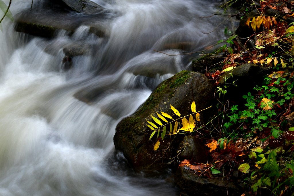 Fall Flowing Brook