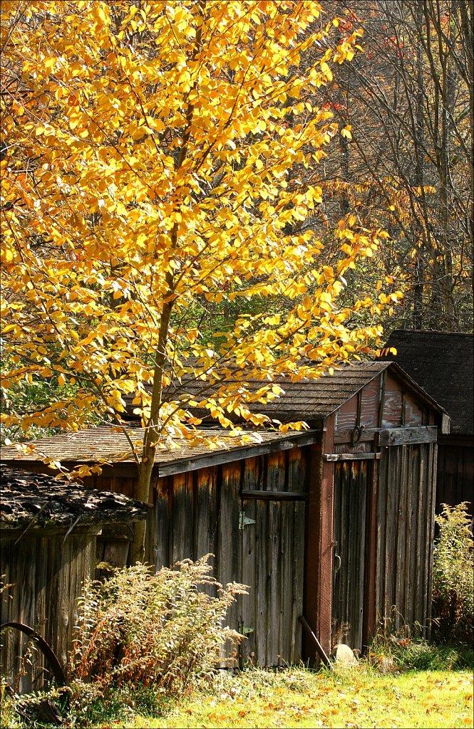 Fall 2019 Upstate NY