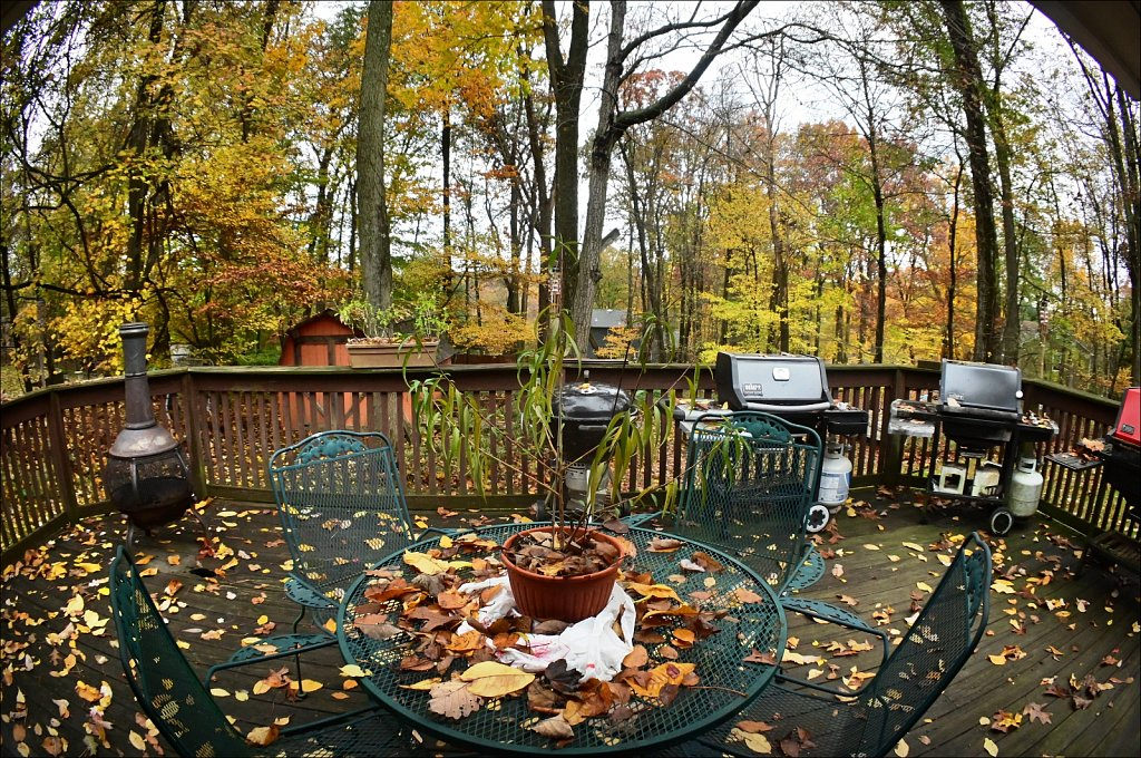Backyard Fall 2020